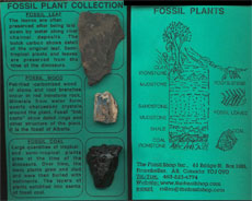 FOSSIL PLANT COLLECTION