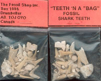 SHARK TEETH IN A BAG